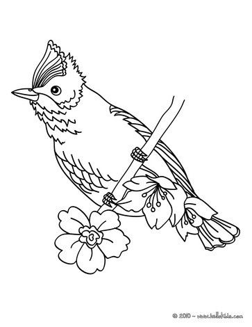 Beautiful Bird Coloring Page Nice Sheet More Original Content On Hellokids