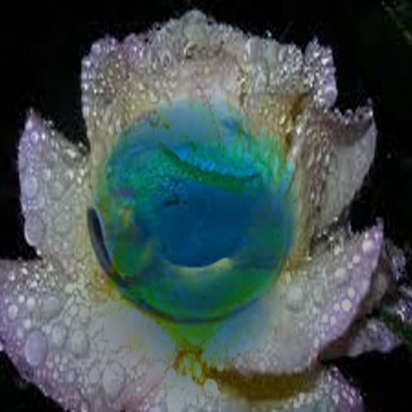 """Tite Perle""  -""Little Pearl"" by Steeve Girard, via Behance"