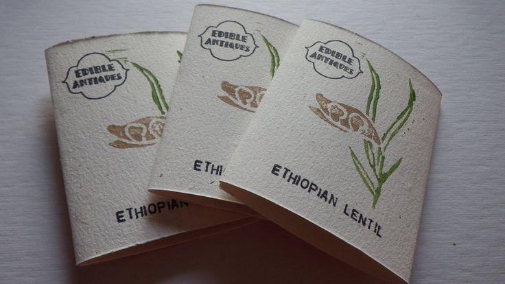 """Ethiopian"" Lentil Seeds"