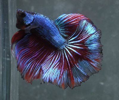 10349 best fish and aquariums images on pinterest for What type of water do betta fish need