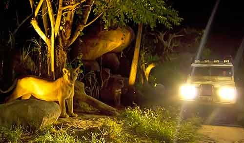 Discount Tickets cheap which package for NIGHT SAFARI PACKAGE