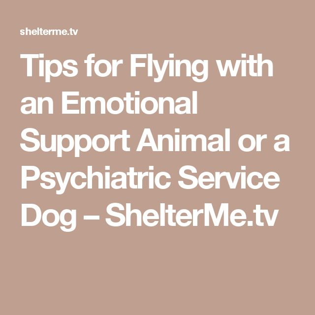 Registering Dog As Service Animal Free Flying