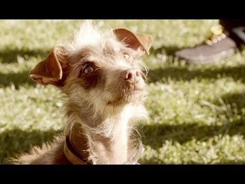 19 best dog tv commercials images on pinterest tv ads tv bud light rescue dog super bowl commercial mozeypictures Choice Image