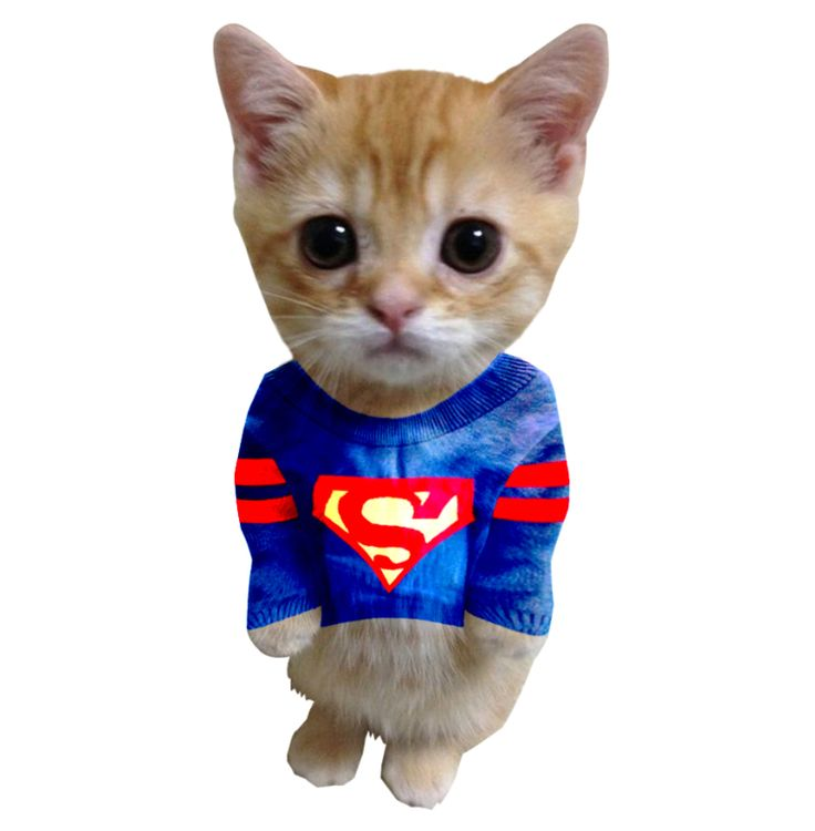 Super cat collage #cats #catlovers #catclothing #funnyanimals