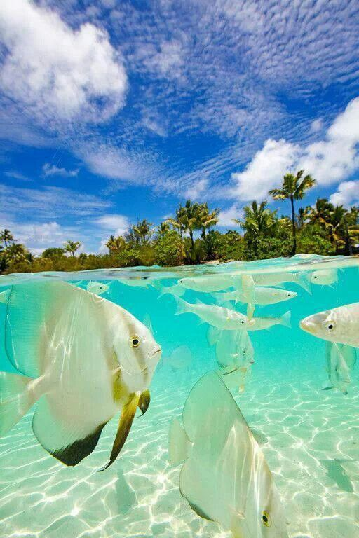 Bora Bora ! French Polynesia. Yes, the water is that clear and there are those fish in it as well.