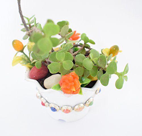 Super The 25+ best Feng shui jade plant ideas on Pinterest | Feng shui  WH88