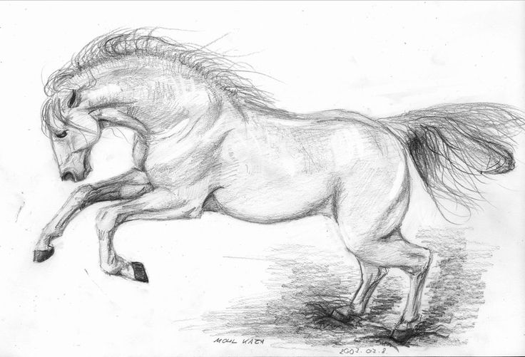 How To Draw A Horse Head Andalusian stallion by...