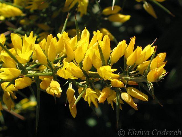Flores y Palabras: Esencias florales para subir el ánimo