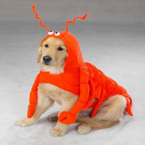 X-LARGE - LOBSTER PAWS - Dog Halloween Costume - http://www.thepuppy.org/x-large-lobster-paws-dog-halloween-costume/