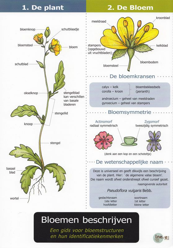 Kaart Bloemen beschrijven