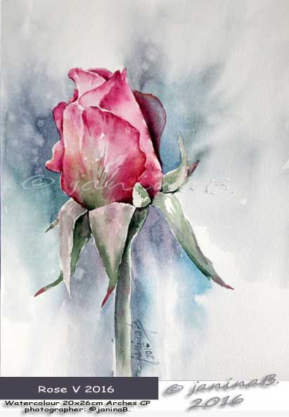 Rose V 2016 / Watercolour 20x26cm  Arches CP ©janinaB.