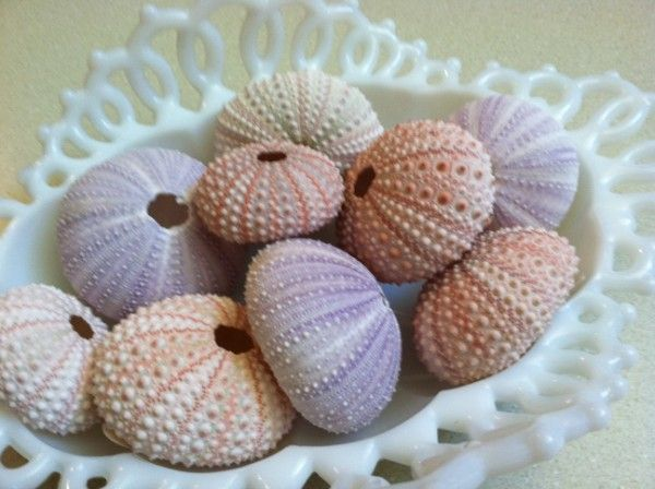 Small violet and pink sea urchins in a milk glass dish make beautiful wedding or summer table centerpieces.