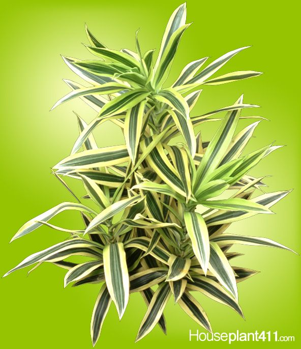 140 Best Images About Houseplants With Beautiful Leaves On