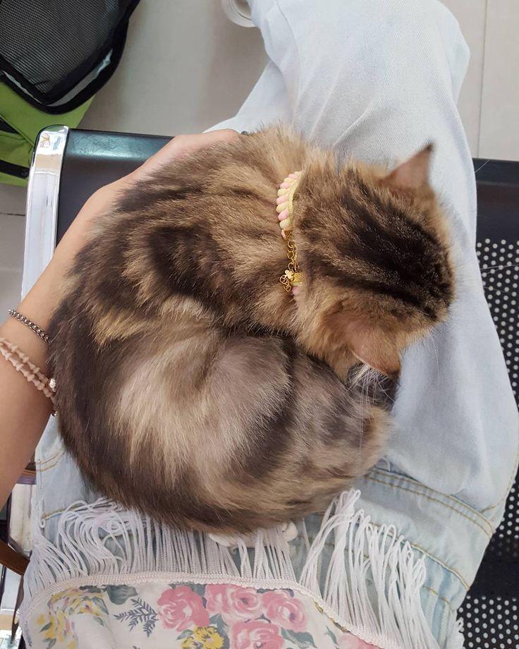 อย บ านทำเป นซ า มาหาหมอน ขดต วกลมเลยนะย ยถ วยฟ ฉ ดว คซ น Slv Slvhospital โรงพยาบาลส ตว สวนหลวง แมว คนร กแมว ส ตว เล ยง เป ส ตว เล ยง แมว