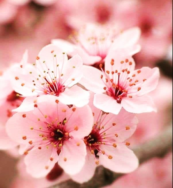 New The 10 Best Art Today With Pictures Paper Sketchbook Illustrations Picture Pictureoftheday Artpop Art Sakura Tree Sakura Flower Blossom Trees