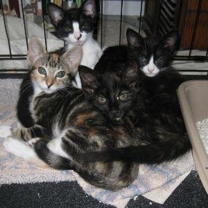 Cat Thursday:  Meet the Foster Kittens!