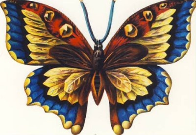 Pretty, pretty butterfly