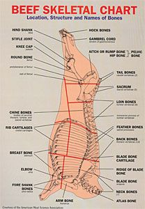 Beef Skeletal Chart | FOOD: Butcher Cuts Of Meat & Fish