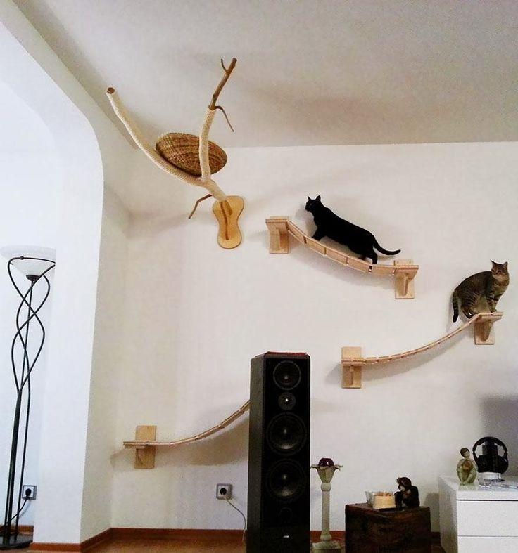 juegos de cuidar mascotas, juegos de gatos bebes, juegos de mascotas,juegos de gatos,juegos de gatitos,cuidado de gatos,casas para gatos