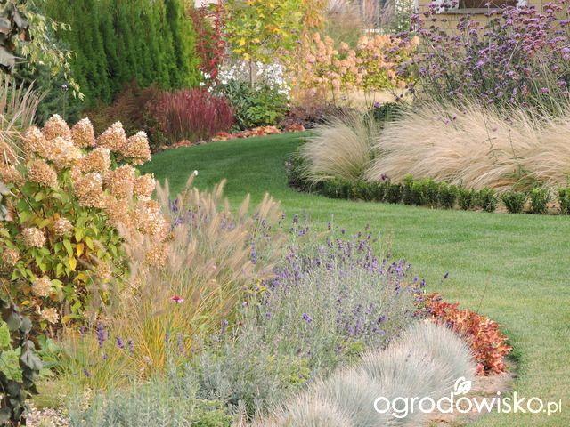 Zielonej ogrodniczki marzenie o zielonym ogrodzie - strona 855 - Forum ogrodnicze - Ogrodowisko