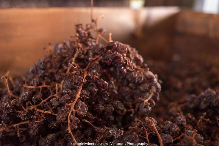 #Vinsanto #Grapes