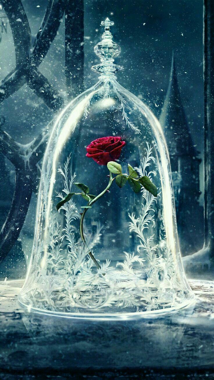 Me encanta la rosa de la bella y la bestia
