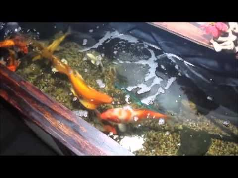 13 best indoor pond ideas images on pinterest indoor for Koi pond construction cost