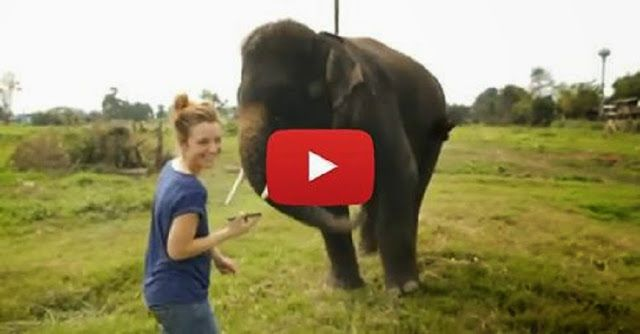http://www.natureknows.org/2014/06/proof-that-elephants-are-incredibly-smart-i-can-not-believe-what-he-does.html