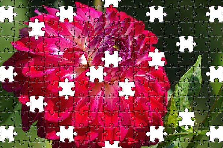 Free Jigsaw Puzzle Online - Dahlia