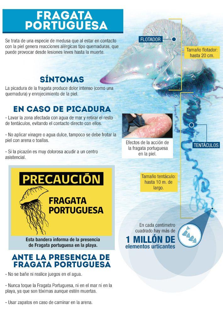Infografía: Conoce los peligros de la fragata portuguesa y los balnearios donde se encuentra