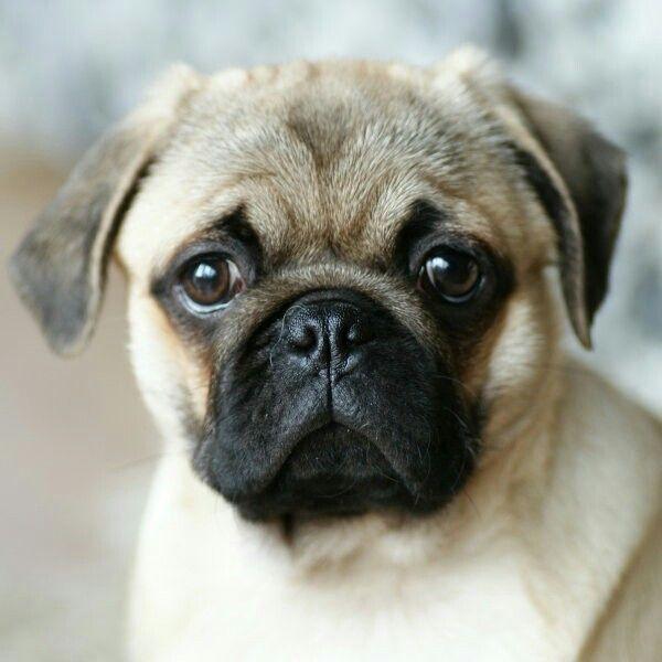 Dog ,,wuf''