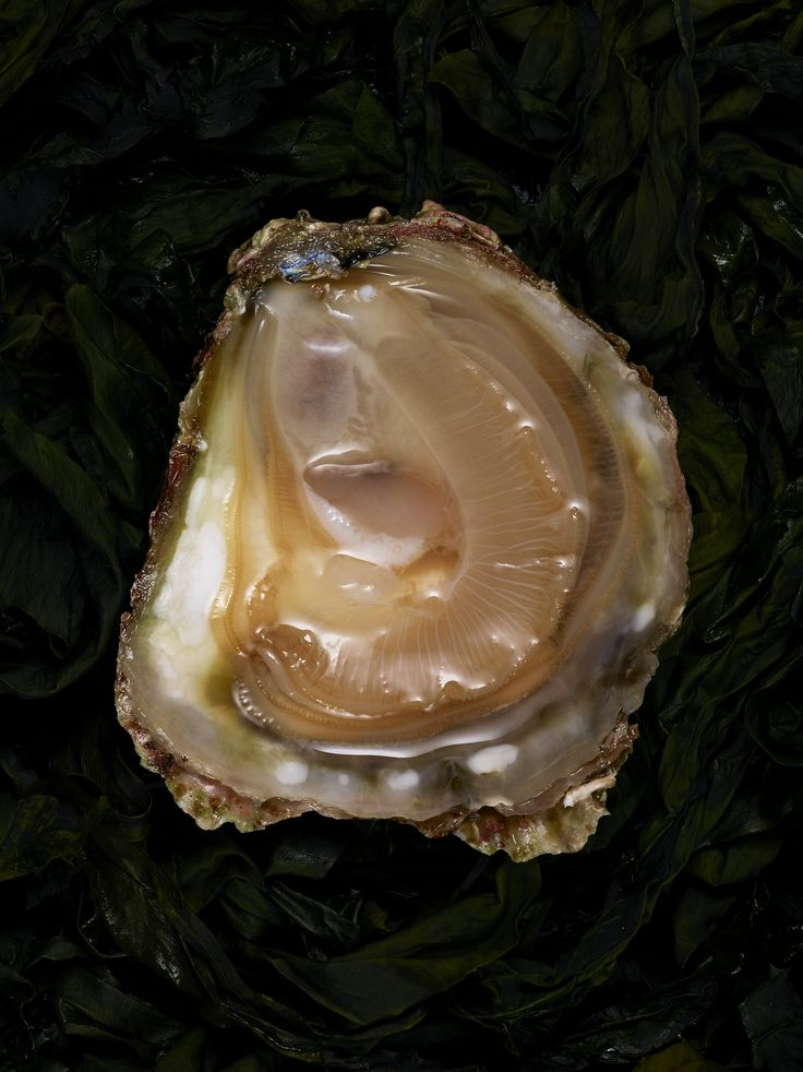 THE (DIPLOÏD) OYSTER IS MY WORLD | Ambassade excellence