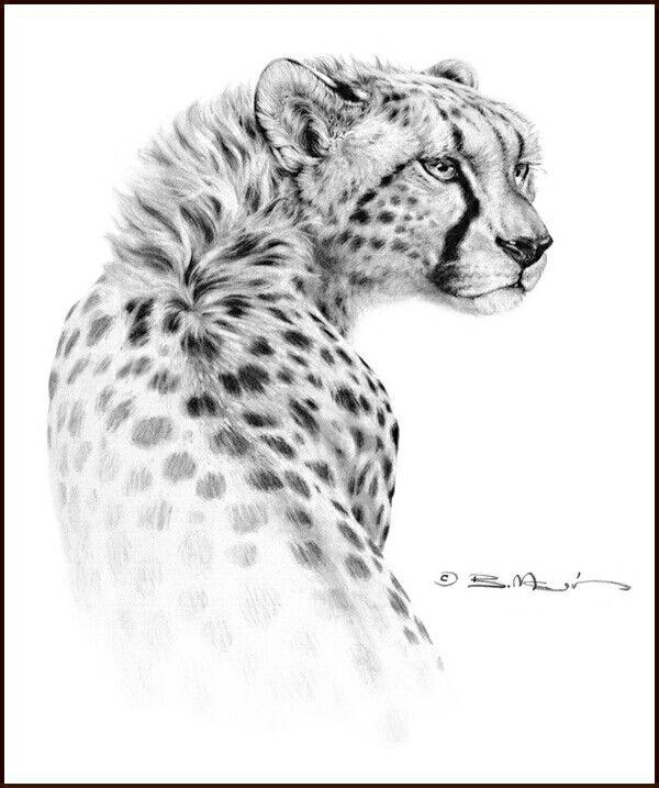 Gepard | Rysowanie dzikich kotów | Pinterest | Tattoo