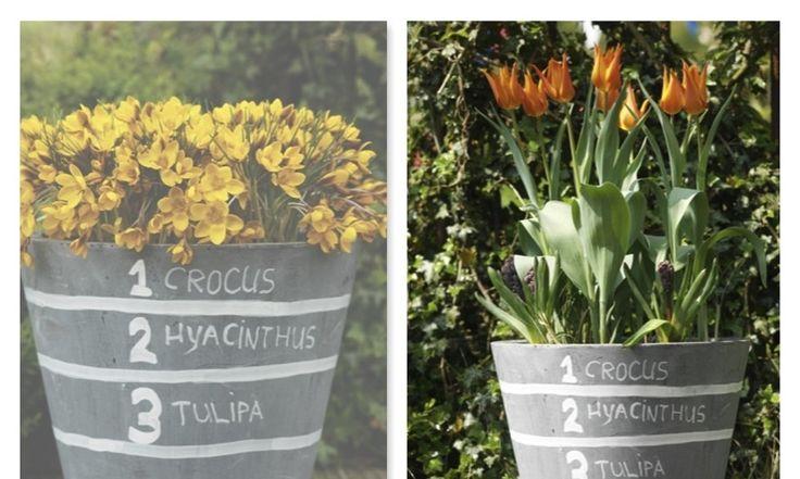 Supersmarta sättet att plantera vårlökar - HD