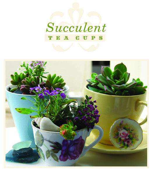 Need to hit the flea markets to find some tea cups for these little succulent tea cup gardens.
