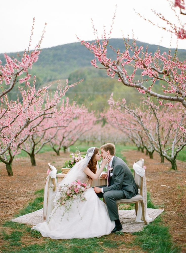34 Best Images About Cherry Blossom Wedding Theme On
