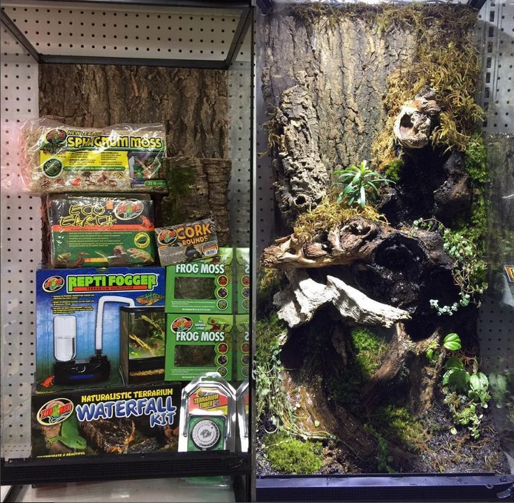 Before and After Zoo Med Skyscraper Terrarium with cork, live plants, Natural Waterfall Display, and Frog Moss for detail.