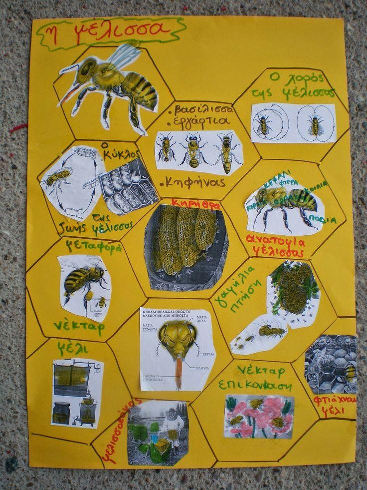 παιχνιδοκαμώματα στου νηπ/γειου τα δρώμενα: ο θαυμαστός κόσμος της μέλισσας !!!