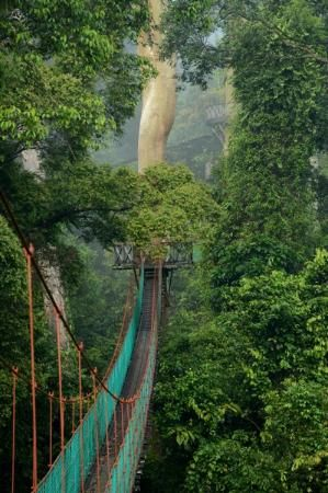 Borneo Rainforest Lodge (Danum Valley Conservation Area, Malaysia) - Lodge Reviews - TripAdvisor  http://www.tripadvisor.com/Hotel_Review-g6439972-d480639-Reviews-Borneo_Rainforest_Lodge-Danum_Valley_Conservation_Area_Sabah.html