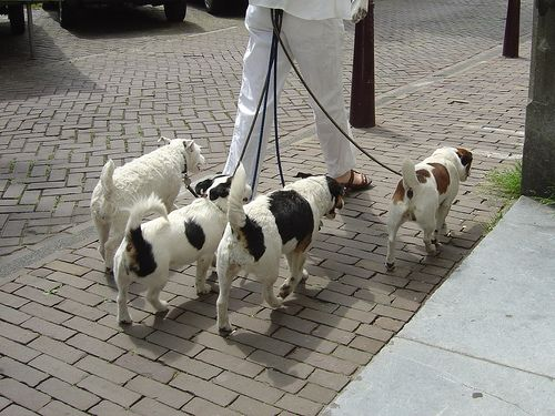 How to Become a Professional Dog Walker in 12 Steps