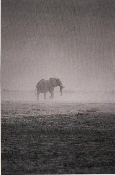 #wildlife #africa