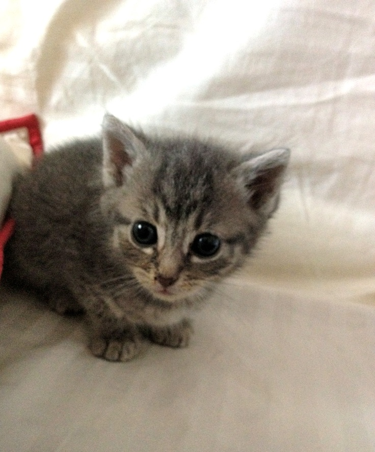 3 week old kitten But I love you little kitty! Pinterest