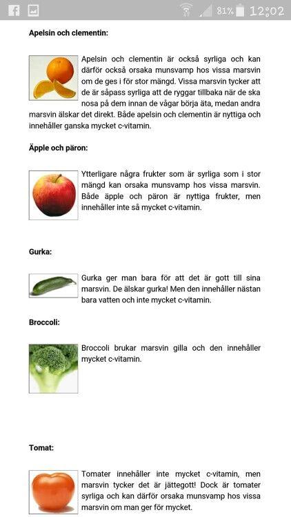 Food for guinea pigs, swedish languidge.