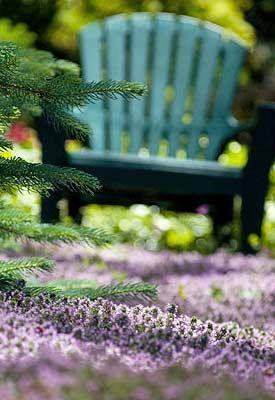 grass alternative plant a thyme lawn