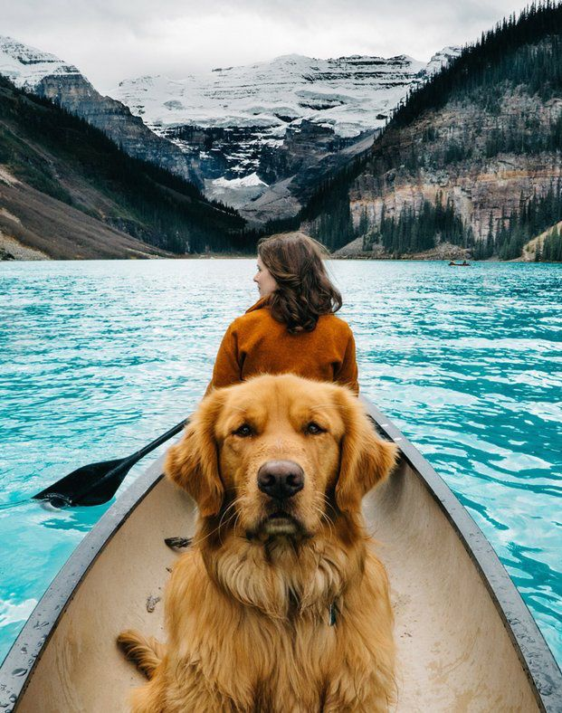 10 Pets of Instagram Who Travel Better Than We Do