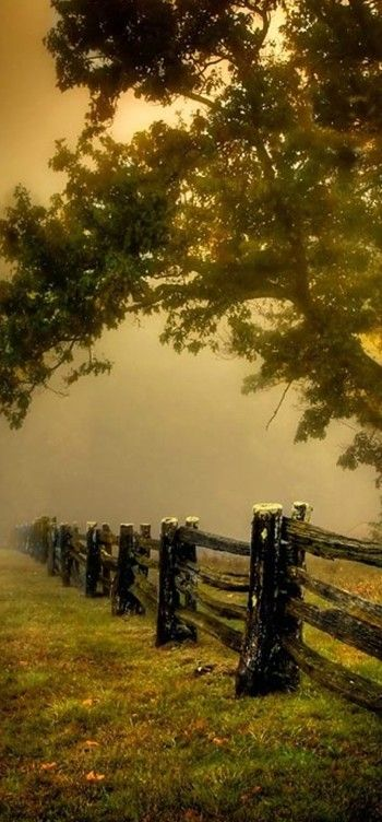 Foggy pasture on the Blue Ridge Parkway somewhere in North Carolina or Virginia • photo: Judy V. Kennamer on BetterPhoto