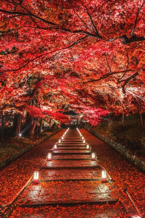 Dye it Red - Kyoto, Japan