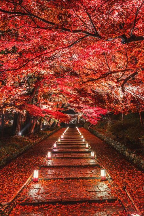 Dye it Red - Kyoto, Japan