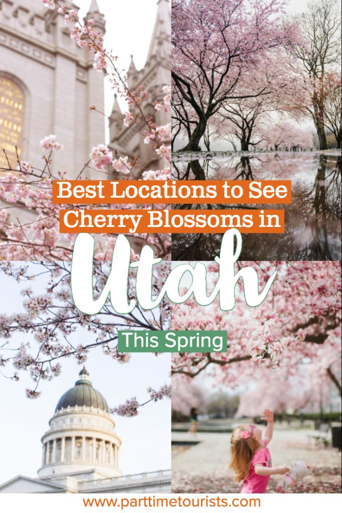Best Locations To See Cherry Blossoms In Utah This Spring Utah Photography Photo Spots Best Location
