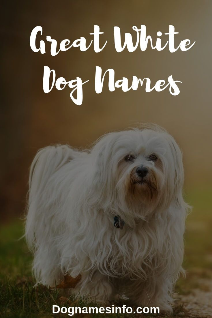 Unique White Dog Names Ideas For Black And White Dogs 2020 Dog